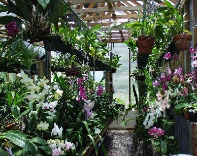 RVO Greenhouse Center Aisle