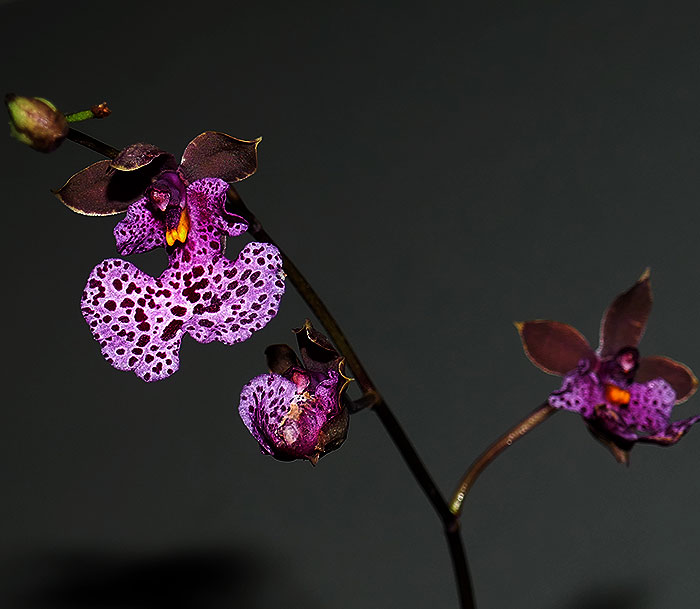 Name:  flowers.jpg Views: 304 Size:  63.0 KB
