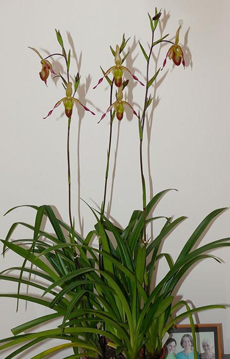 Name:  plant.jpg Views: 66 Size:  69.9 KB