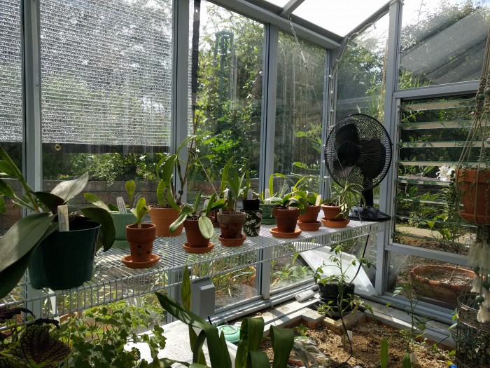 Name:  greenhouse072018csized.jpg Views: 206 Size:  162.4 KB