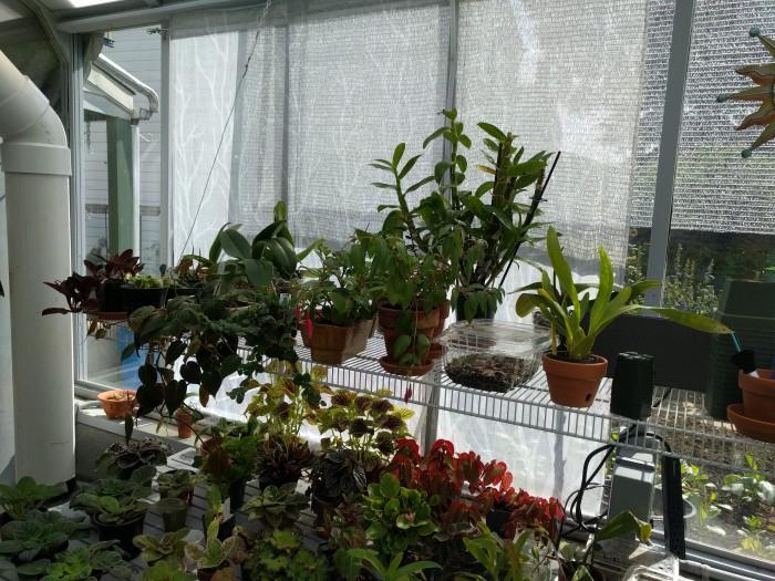 Name:  greenhouse072018asized.jpg Views: 193 Size:  144.9 KB