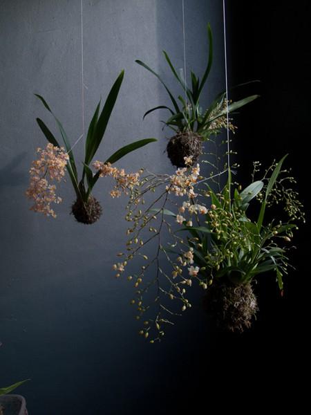 Name:  string garden 3.jpg Views: 10292 Size:  56.4 KB