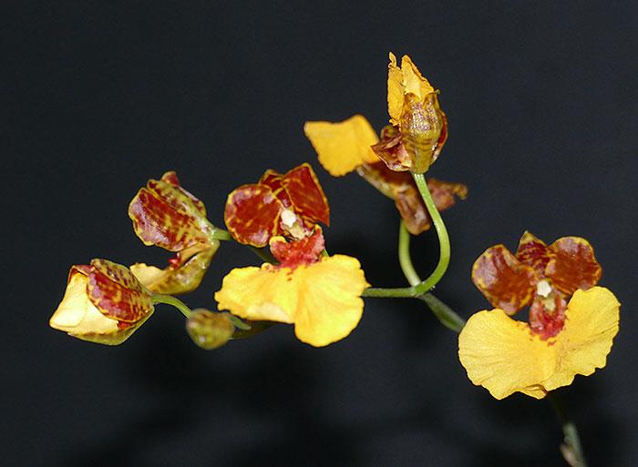 Name:  flowera.jpg Views: 273 Size:  58.5 KB