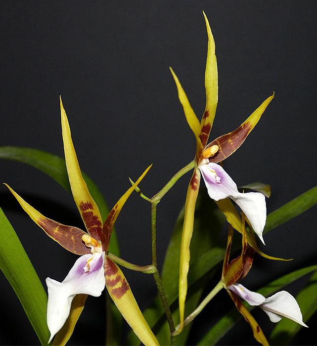 Name:  larger-flowers.jpg Views: 40 Size:  80.9 KB