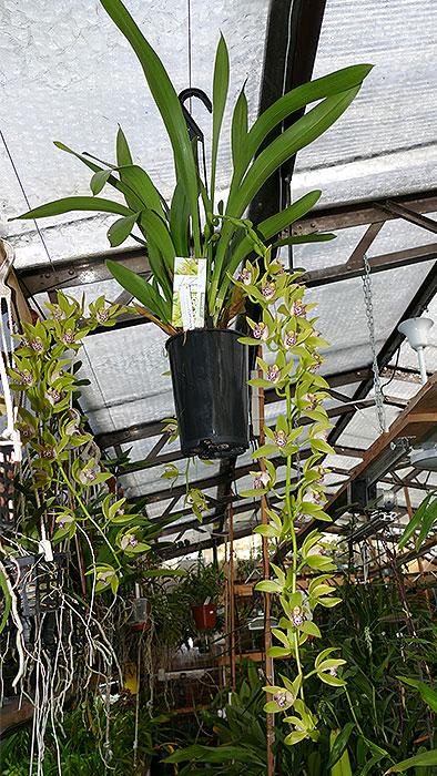 Name:  plant.jpg Views: 56 Size:  149.2 KB