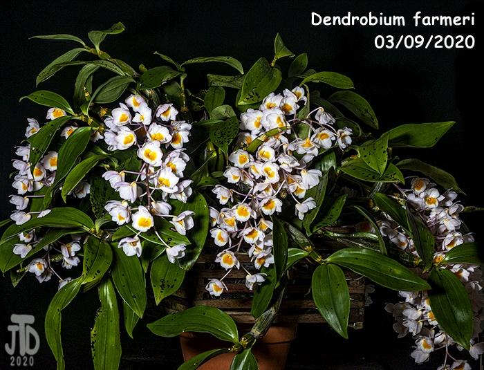 Name:  Dendrobium farmeri3 03102020.jpg Views: 72 Size:  243.6 KB