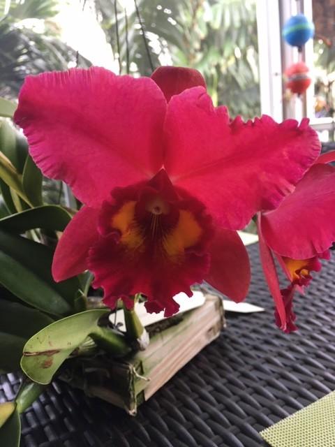 Name:  Pot. Eldorado 'Hawaii'2.jpg Views: 36 Size:  78.2 KB