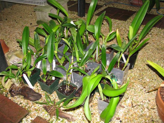 Name:  New plants Sept. 2010 1 (Small).JPG Views: 1644 Size:  86.6 KB