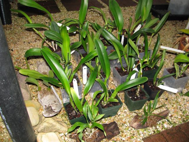 Name:  New plants Sept. 2010 3 (Small).JPG Views: 673 Size:  81.2 KB