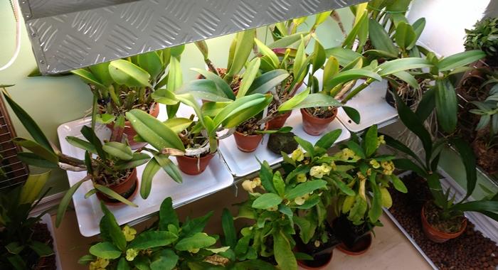 Name:  orchidroom1.jpg Views: 625 Size:  189.3 KB