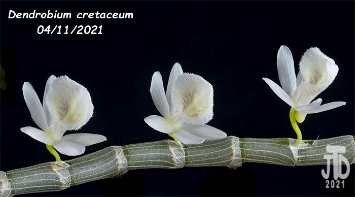 Name:  Dendrobium cretaceum5 04112021.jpg Views: 66 Size:  100.4 KB