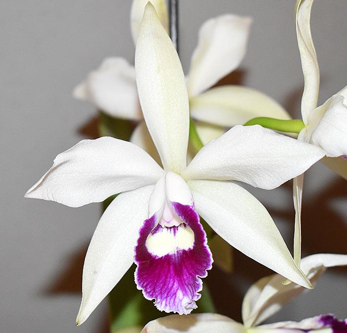 Name:  Flower.jpg Views: 250 Size:  74.8 KB