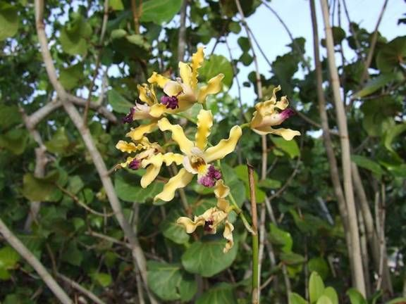 Name:  E-Mail Orchid 1.jpg Views: 875 Size:  48.6 KB