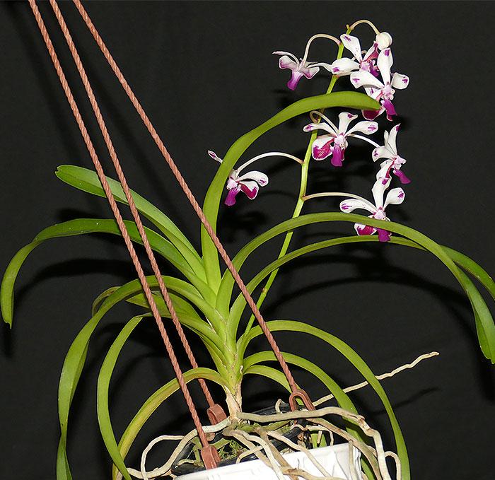 Name:  plant.jpg Views: 70 Size:  123.2 KB