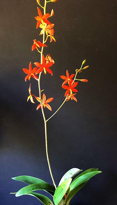 Name:  plant.jpg Views: 46 Size:  46.5 KB
