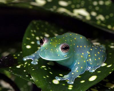 Name:  frog.jpg Views: 909 Size:  50.5 KB