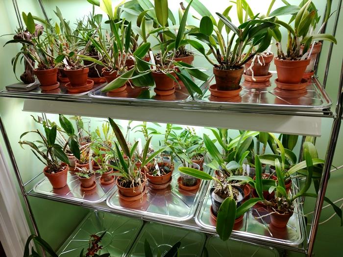 Name:  orchidroom5.jpg Views: 620 Size:  296.2 KB