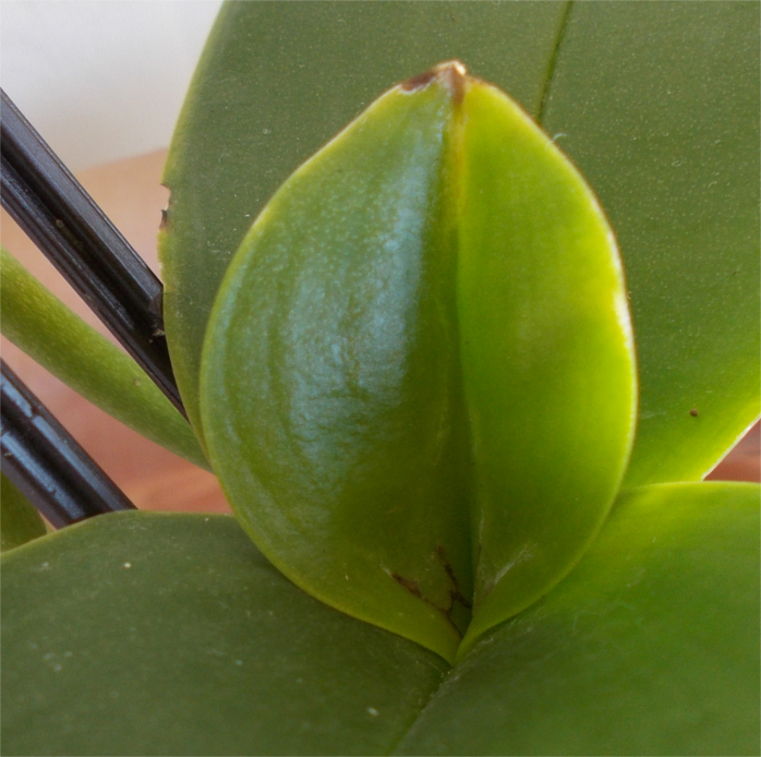 Name:  orchid1b.jpg Views: 140 Size:  426.1 KB