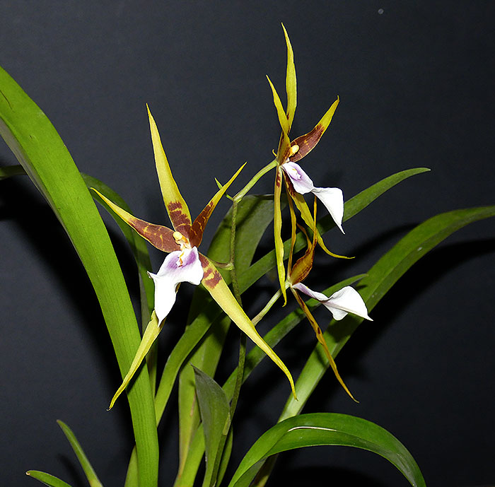 Name:  flowers.jpg Views: 41 Size:  92.6 KB