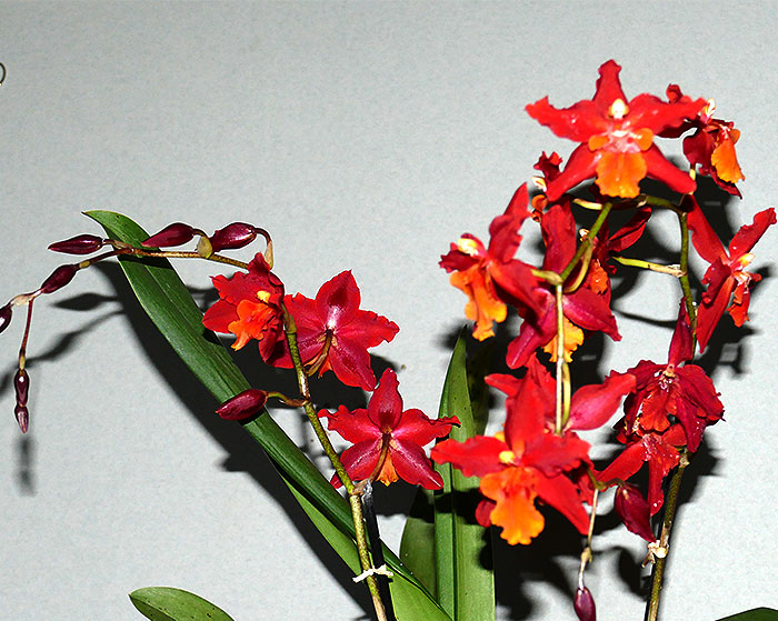 Name:  Flowers-14-Dec..jpg Views: 80 Size:  120.8 KB