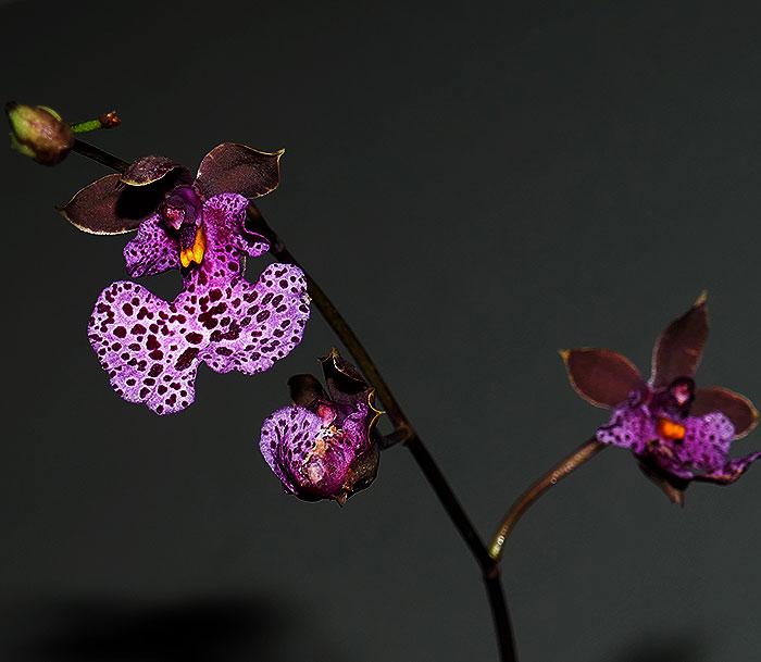 Name:  flowers.jpg Views: 293 Size:  63.0 KB