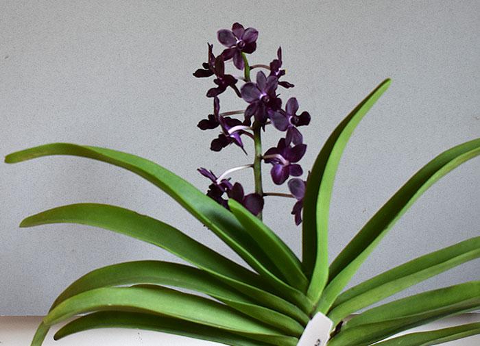 Name:  plant.jpg Views: 178 Size:  78.7 KB
