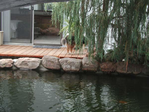 Name:  Fish Pond-3.jpg Views: 80 Size:  82.3 KB