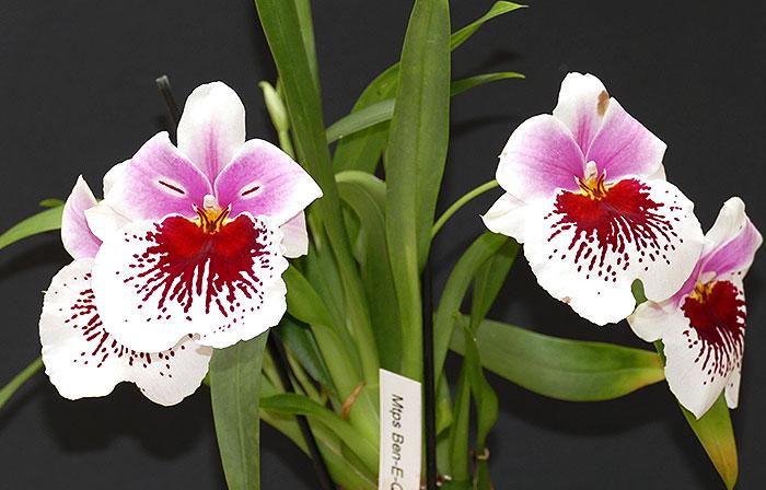 Name:  Flowers-1.jpg Views: 46 Size:  75.6 KB