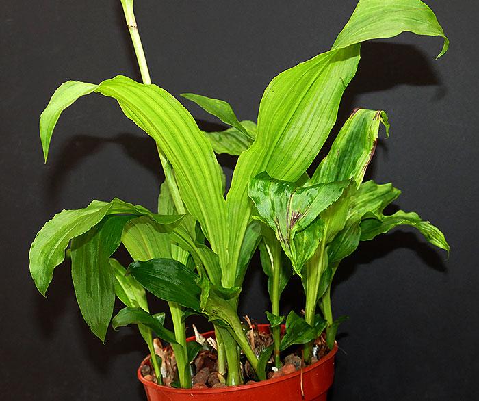 Name:  plant.jpg Views: 66 Size:  105.7 KB