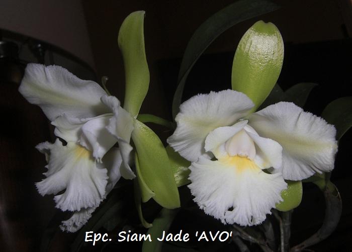 Name:  EpcSiamJade02.jpg Views: 1215 Size:  113.5 KB