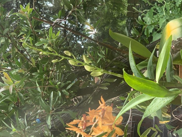Name:  orchids2020sm_04.jpg Views: 49 Size:  102.5 KB