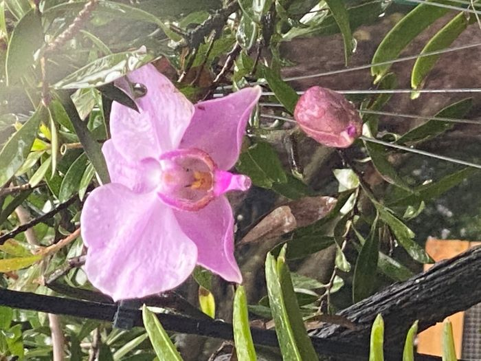 Name:  orchids2020sm_06.jpg Views: 43 Size:  84.0 KB