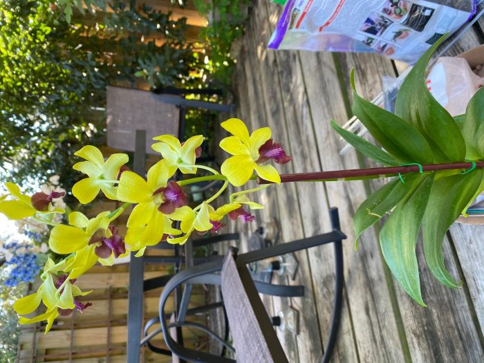 Name:  orchids2020sm_09.jpg Views: 42 Size:  85.4 KB