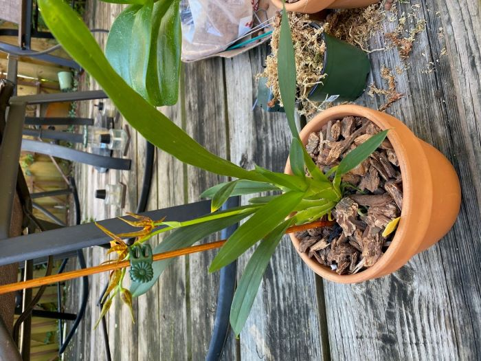 Name:  orchids2020sm_0a.jpg Views: 41 Size:  402.9 KB