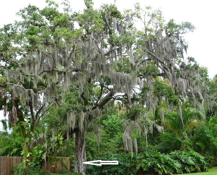Name:  swamp01.jpg Views: 1317 Size:  309.7 KB