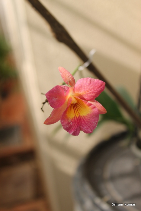 Name:  Guaritonia Henry Wan1.JPG Views: 162 Size:  115.9 KB