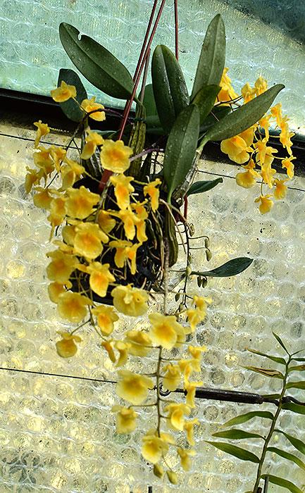 Name:  plant-on-22-April-18.jpg Views: 124 Size:  140.1 KB