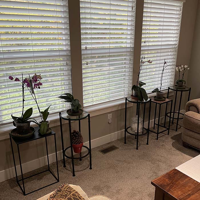 Name:  Orchids - East.jpg Views: 15 Size:  139.6 KB