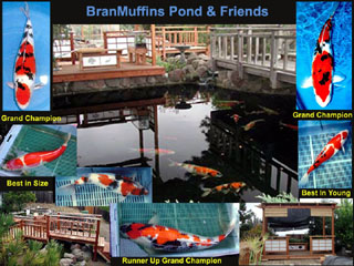 Name:  Fish Pond Collage.jpg Views: 136 Size:  42.8 KB