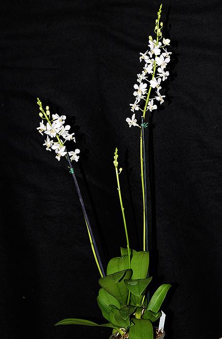 Name:  whole-plant.jpg Views: 530 Size:  221.1 KB
