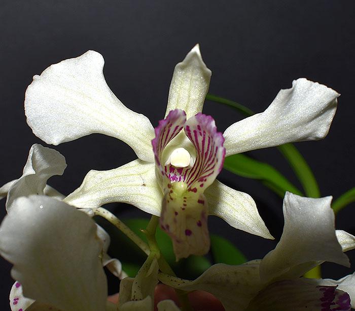 Name:  Flower.jpg Views: 440 Size:  75.1 KB