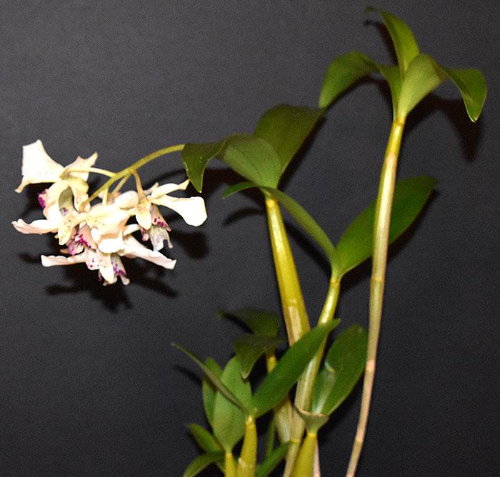 Name:  plant.jpg Views: 393 Size:  91.4 KB