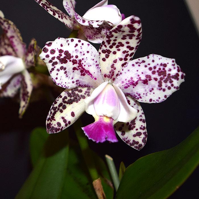 Name:  Single-Flower.jpg Views: 180 Size:  106.3 KB