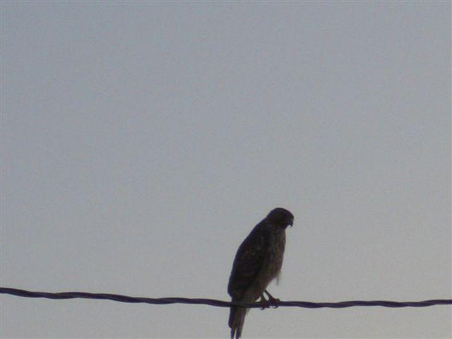 Name:  Eaglet 007.jpg Views: 399 Size:  21.8 KB