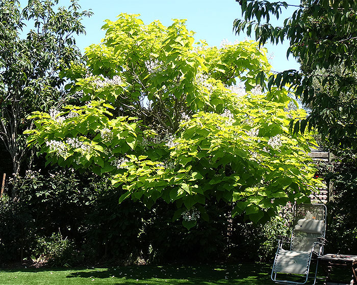 Name:  tree.jpg Views: 131 Size:  231.9 KB