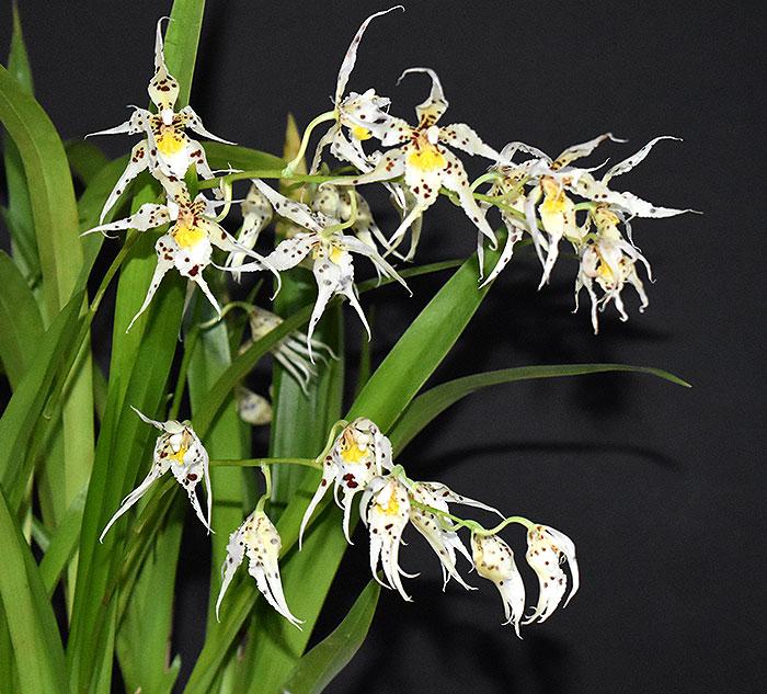 Name:  plant.jpg Views: 205 Size:  128.0 KB