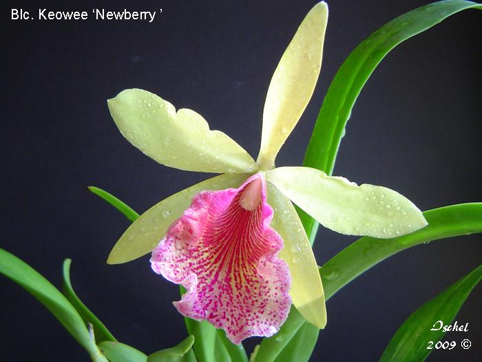 Name:  Blc. Keowee ' Newberry '_edited-1.jpg Views: 799 Size:  374.5 KB