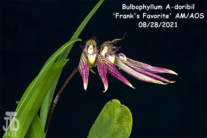 Name:  Bulbophyllum A-doribil 'Frank's Favorite' AMAOS2 08282021.jpg Views: 29 Size:  130.0 KB