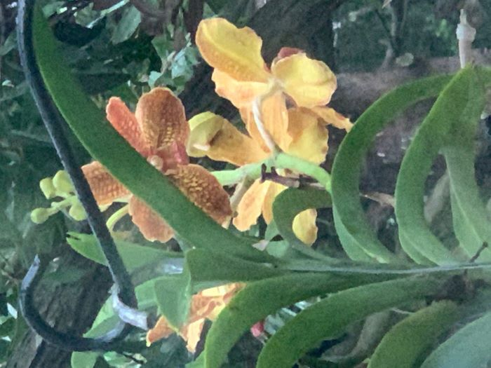 Name:  orchids2020sm_02.jpg