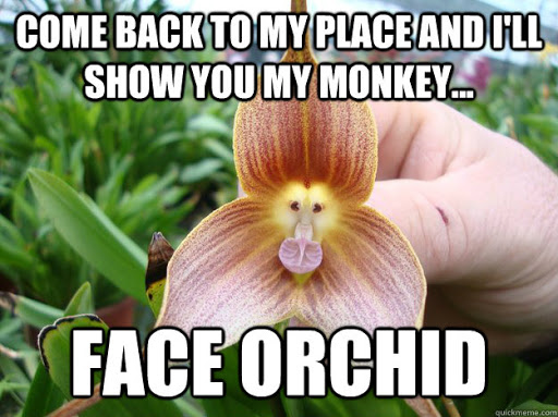 Name:  orchid.jpg Views: 11 Size:  67.4 KB